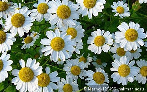 Фото с сайта blog-travushka.ru