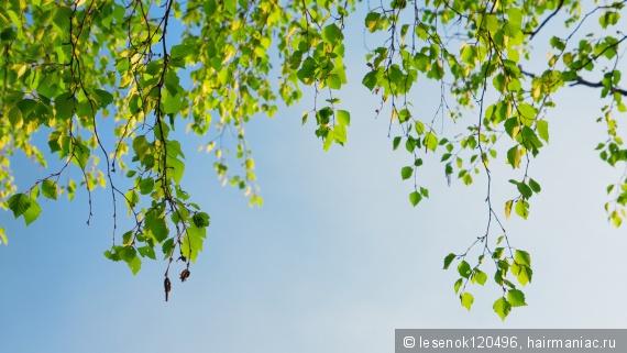Фото с сайта mota.ru